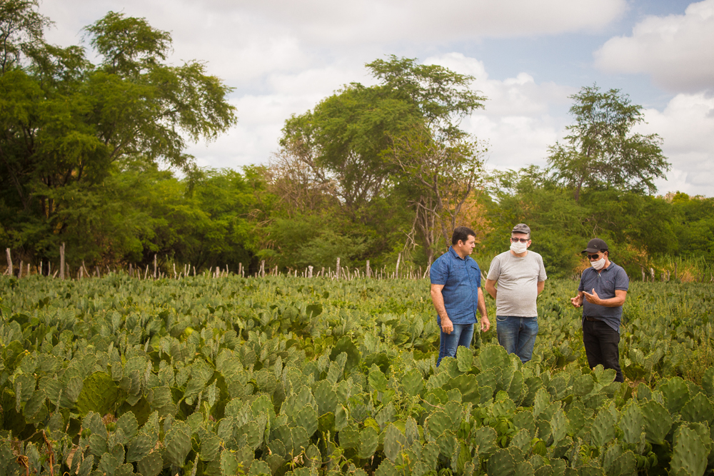 2021-01-11-agricultura-romualdo-francisco-cesar-6835.jpg